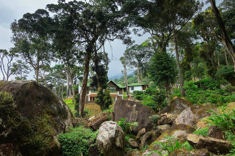 Neelakurunji Plantation Munnar