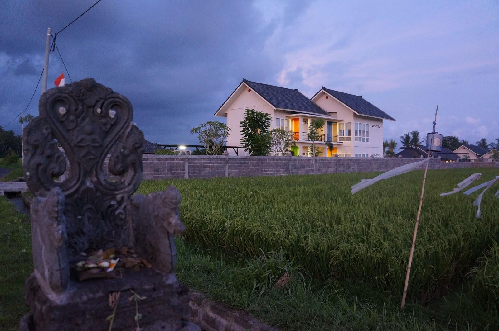 Puri12 Bed And Breakfast   Ricefield View