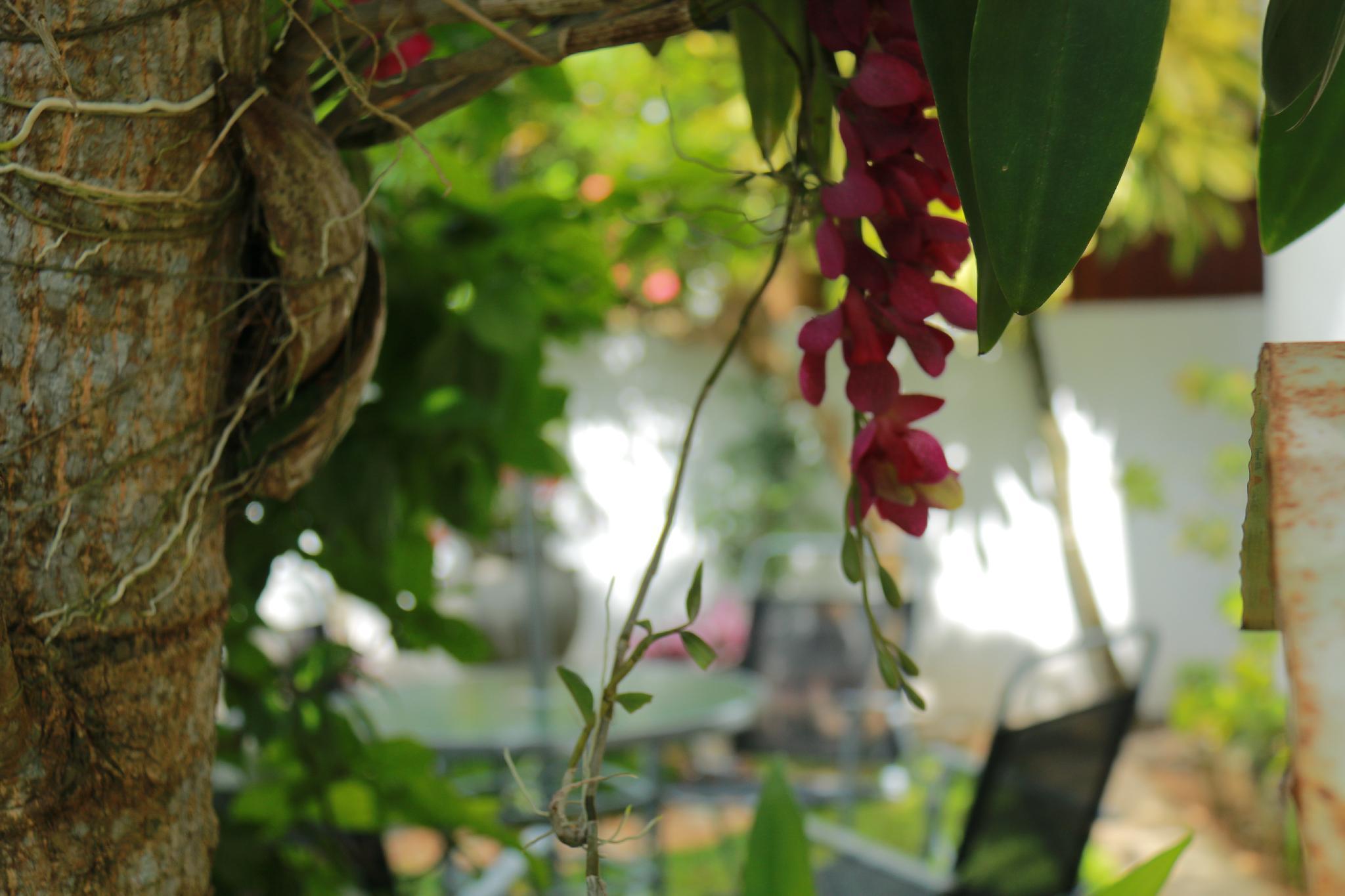 Suramya Villa   Luxurious Apartment In Galle