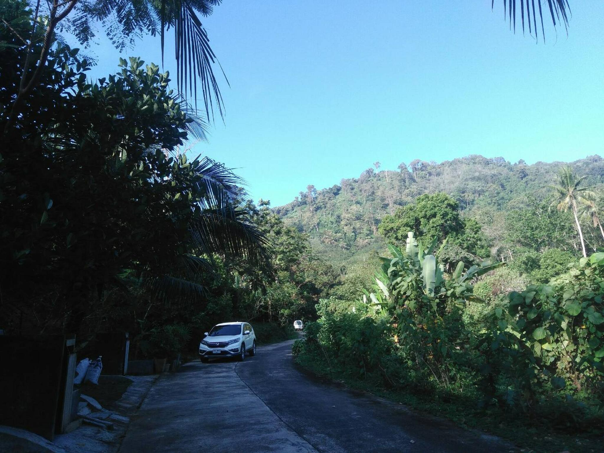 Phuchada Lush Forest