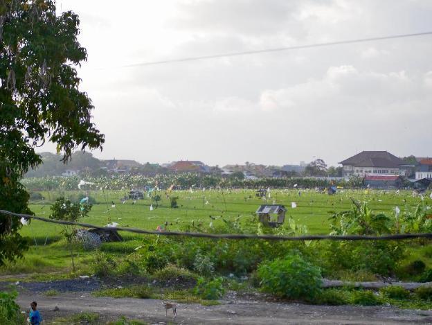 Biliq Coliving - #6 Rice Field View
